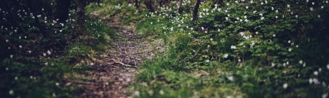 Highly detailed picture of forest path lined with grass and snowdrops